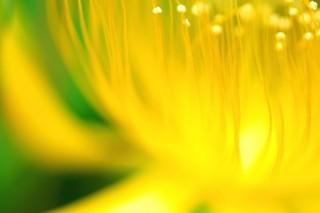 花粉症のサプリメントの種類について